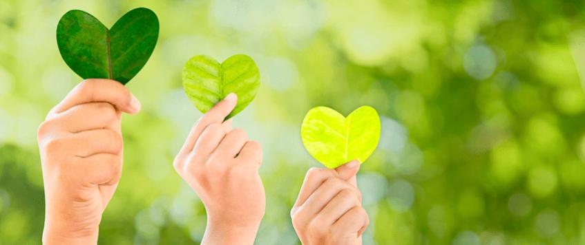 Como os Projetos de Sustentabilidade da Joanini colaboram com o Meio Ambiente?